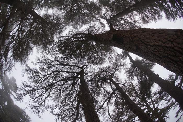 古くから木材として重宝されていたレバノン杉は、度重なる伐採のため、現在は1200本ほどしか残っていません。しかし、樹齢1200年を超えるレバノン杉の巨木が空を覆う様は圧巻で、この地が「神の杉の森」と呼ばれるに相応しい場所であることを体感することができます。