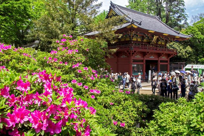 東京都文京区に鎮座する根津神社は、日本史上の英雄、日本武尊(ヤマトタケル)が創建したと伝えられている古社です。