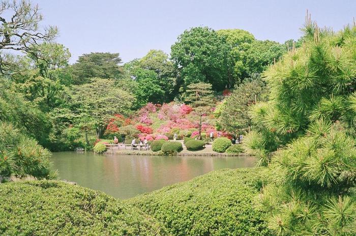 六義園は、元禄8年(1695年)に、江戸幕府5代目将軍、徳川綱吉の家臣・柳沢吉保によって造園された大名庭園です。造園時から300年以上もの時間を経た今尚、往時の面影を色濃く残している六義園は、国の特別名勝に指定されています。