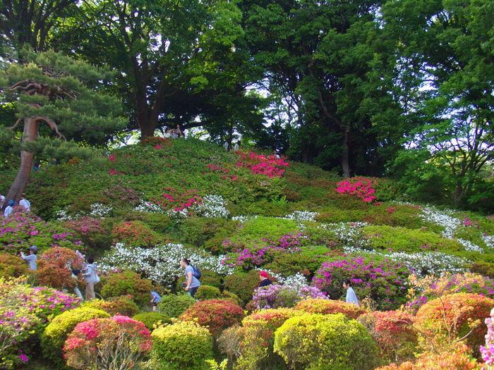87000平方メートルを超える広大な敷地には、つつじの他に、松、モミジ、ケヤキ、クスノキ、サクラなどの樹々が植栽されています。そのため、六義園は、都心でありながら、緑豊かな森林浴スポットにもなっています。