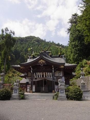 今熊神社は、東京都八王子市にある今熊山の頂に鎮座する神社です。境内には約1500株のミツバつつじが植栽されており、自然豊かな今熊山の春に彩りを与えています。