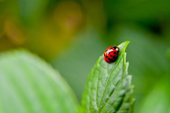 てんとう虫の真ん中の線がファスナーでできていて、黒丸を外して中にしまうことができる型紙。てんとう虫の横にはお花の真ん中のボタンで花びらを留めているので、色の組み合わせを変えて遊ぶこともできますよ。
