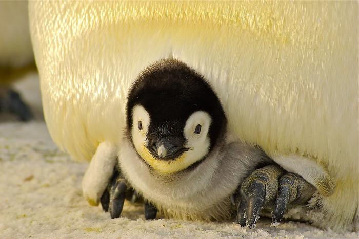 真ん中のかまくらがポケットになっていて、ひもをひっぱるとペンギンが中に収納される型紙。手が込んでいて、大人が見てもとっても素敵な世界観ですよ。
