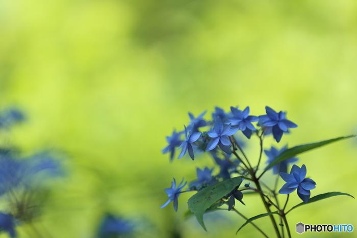 最後に、野生の山野草を勝手に取って持ち帰る行為は絶対にNGです。きちんとしたところで購入し、ルールを守って楽しみましょう。繊細で可憐な花姿に癒され、季節を迎えるたび愛着が湧く日本の花たち。お庭や窓辺に、飾らない清楚な姿を置いてみてはいかがでしょうか。