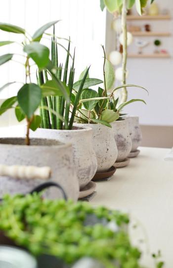 プラスするだけでお部屋がセンスアップして見えるグリーン。どこにどんなグリーンを置くのが合うのか悩みますよね。植物は陽当りや水やりの頻度、お部屋の温度に大きく左右されてしまうもの。