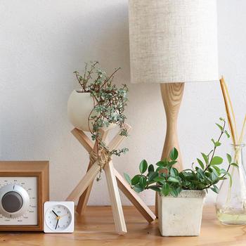 一人暮らしのワンルームなどに大きめの観葉植物を置いてしまうと、どうしても圧迫感が出てしまいます。限られたスペースだからこそ、可愛らしいミニ観葉植物の出番です。初心者さんでも扱いやすい、小さめサイズの観葉植物の飾り方をご紹介します。