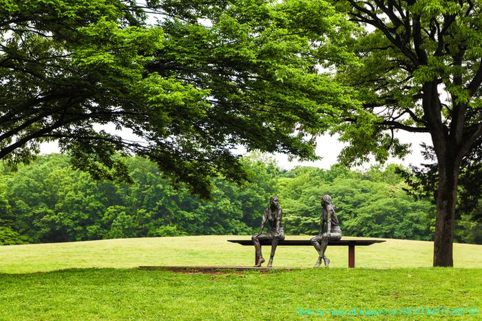 緑がいっぱい広がる府中の森公園。なだらかな坂やフラットな道が続き、車いすやベビーカーで、のんびり歩くことが出来ます。