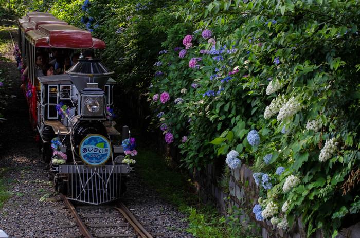 プールと遊園地を併設したとしまえんは、複合型レジャー施設です。桜、あじさいの名所としても知られており、敷地内には紫、青、白といった色とりどりのアジサイが植栽されています。