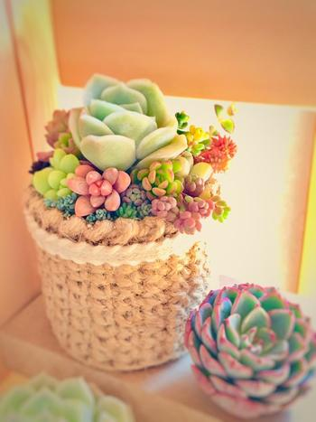 お部屋のスペースが限られているからといって、観葉植物や生花を飾るのをあきらめてしまうのはもったいないことです。選び方や飾り方をちょっと工夫すれば、圧迫感を感じることなくより素敵な空間作りが叶います。今日からお部屋にフレッシュな植物&生花を取り入れて、日々の暮らしに「癒し」をプラスしましょう。