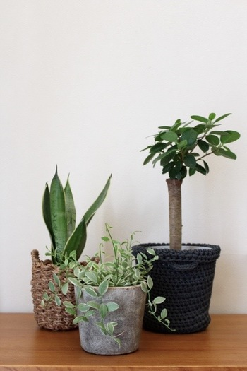 ハンドメイドのIKEAバスケットやアバカ、淡いグリーンに良く似合うコンクリートのようなシャビーな陶器。個性的でそれぞれの植物に良く合っていますね。