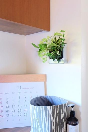 無印良品の「壁に掛けられる観葉植物」は壁面に取り付けるタイプで人気です。育てやすいポトスやアイビー、ワイヤープランツなどツル系植物が中心なのだそう。壁面が華やかになりますね。
