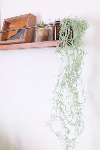 玄関のニッチにフェイクグリーンを飾った、ナチュラルな雰囲気のディスプレイ。垂らすように飾ることで、無機質な壁に動きが生まれます。毎日植物のお手入れをするのは難しいという方は、フェイクグリーンなら気軽に取り入れられますね。