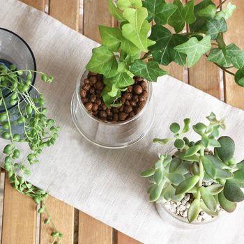 ダイニングテーブルの上やシンク周りにちょこっと置くなら、ハイドロカルチャーもおすすめ。どんなグリーンを入れてもかわいくおしゃれに。水場の近いキッチンなら水を入れやすいのも◎