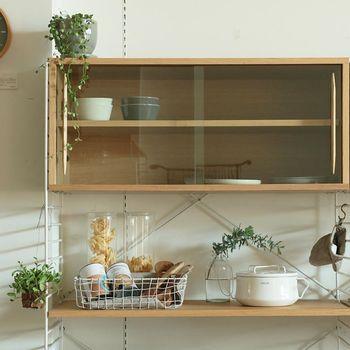 育てやすく成長が分かりやすいツル系の植物。棚上に飾って垂らせばおしゃれ度もアップ。ハンギングも素敵です。