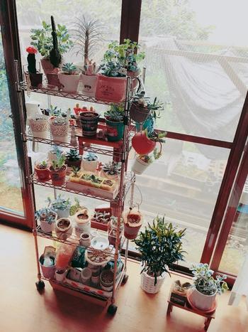 庭に置いたら素敵だなと思って購入した観葉植物も、置くところが無くなるくくらい溢れてしまったという事はないですか? そういう時にもスチールラックがあると一つの場所にグリーンをまとめられ、前後左右といろんな角度から使えるので便利です。お部屋もあっという間にオシャレな空間に変わりますね。