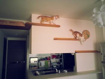 キッチンカウンターの上に設置したキャットウォーク。猫専用の階段に自由に行き来できて、家の中が猫の遊び場になっています。階段を上ったら猫のくつろぎスペースになっているのもいいですね。