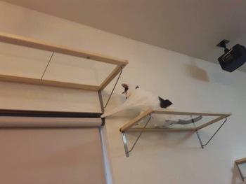 棚板にアクリル板やガラス板など透明な素材を使うと、猫ちゃんの肉球が見えて可愛い♪