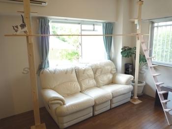 リビングのソファー上にキャットウォーク&キャットタワーを設置。人も猫も快適なお部屋の完成です。