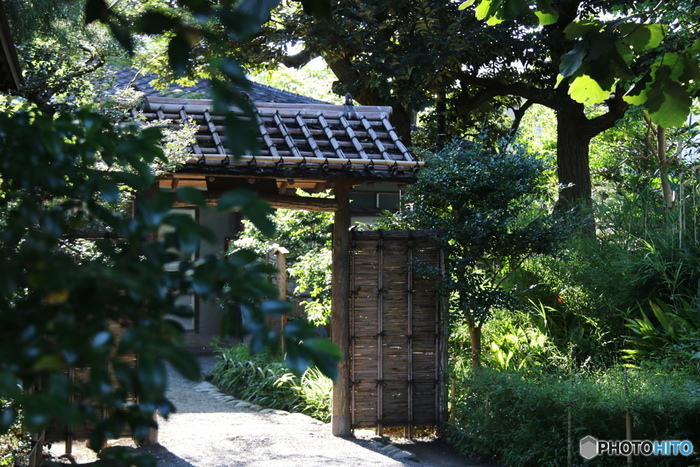 向島百花園は、江戸時代に開園された庭園を再現したもので、国の名勝・史跡に指定されています。園内には、数百種類の植物が植栽されており、四季折々で風情を楽しむことができます。