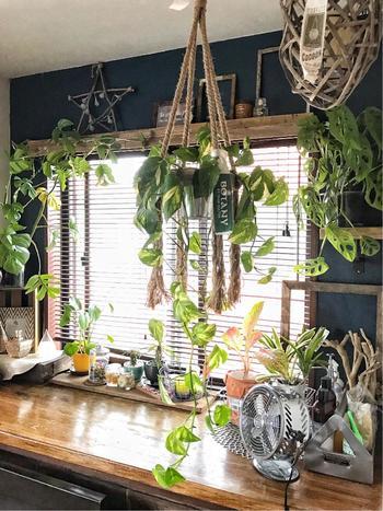 天井などの高い所から植物を吊るす「ハンギング」と呼ばれる手法を使ってコーディネートをしているこちらのお部屋。ツル状の植物がどんどん垂れ下がってくるのを楽しめます。上から吊るすことによってぐんとおしゃれな空間になっていますね。床に置くよりも空間を有効に使える上に、植物の風通しもよくなります。