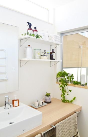 観葉植物のグリーンで白ベースの洗面所を爽やかに演出したこちらのレイアウト。あちこちに散りばめられたグリーンがインテリアのアクセントに。ツル状の植物を高い所から垂らしたり、小さな多肉植物をちょこんと置いたりしても、おしゃれですね♪