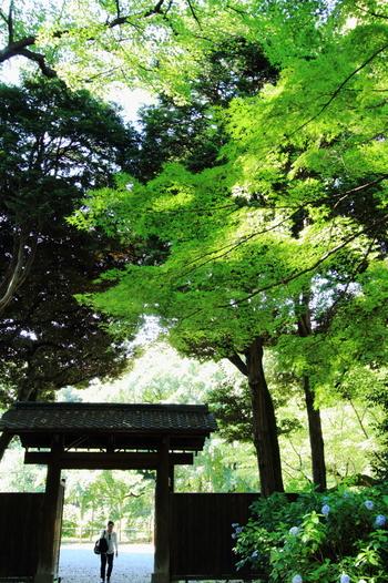 春は桜、初夏はアジサイ、夏は深緑、秋は紅葉と四季折々で美しい景色を見せてくれる六義園は、国の特別名勝で江戸時代の面影を色濃く残す大名庭園です。