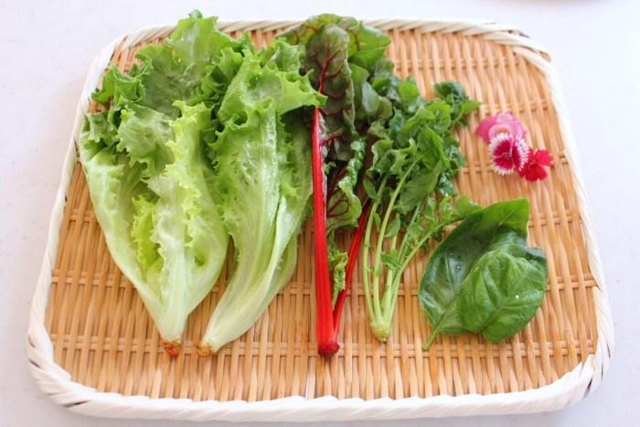 主菜を引き立てるのは、グリーンの葉物野菜たち。一種類よりも、何種類か合わせた方が見栄えよくなります。葉がフリルのように波打っているものをチョイスすると、ボリュームを出すことができます。