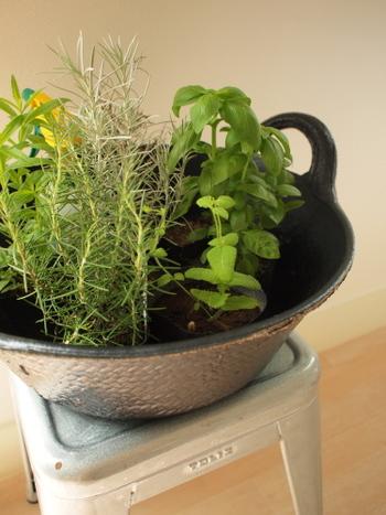 ちょっぴりだけ使いたいハーブ類は、自家栽培してみるといろいろな種類を気軽に使うことができるようになります。お部屋の中でも育てることのできる種類などもあるので、チャレンジしてみてもいいですね。