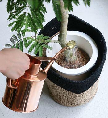 観葉植物にとって命の源である水やり。品種や季節によって必要な水の量が変わってきます。お家に新しく迎え入れた観葉植物が、どれだけの量の水やりが必要なのか最初に知っておくことが大切です◎