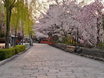 まず、ご紹介するのは京都市内の祇園・東山エリアにある祇園白川。 京都の中でも風情ある街並みが特に人気で、一年を通してたくさんの観光客でにぎわっていますが、桜の季節はまた格別。ゆったりと流れる「白川」沿いの石畳に料亭が並び、桜の背景は風情たっぷり。