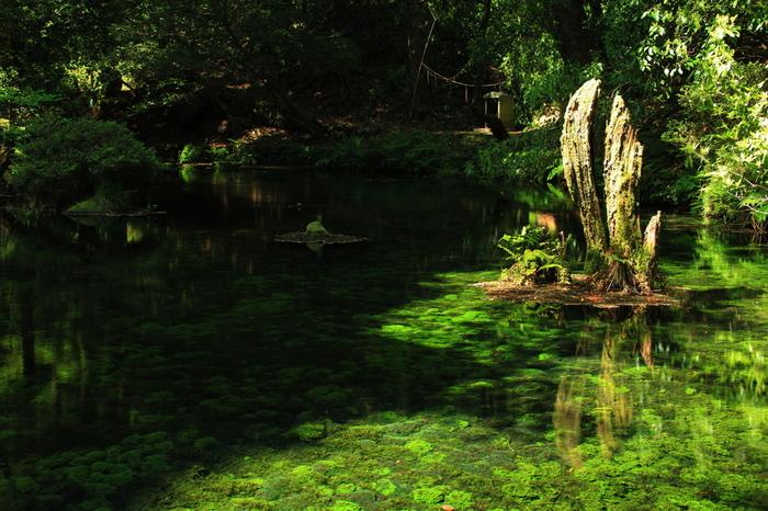 樹齢200年以上の巨木が立ち並ぶ森の中に湧き出た池山水源。閑静で神秘的な空間は癒しの力にあふれ、光の加減で水が青く輝く様は感動ものの美しさ。