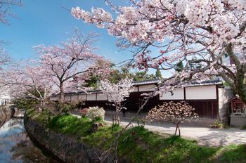 ツアーなどでも必ずと言っていいほどルートに含まれる「哲学の道」。若王子神社付近から銀閣寺近くまで琵琶湖疎水沿いの1.5㎞程の小道で、哲学者・西田幾多郎やその弟子たちがこの道を思索にふけりながら歩いたことから、哲学の道と呼ばれるようになったのだとか。