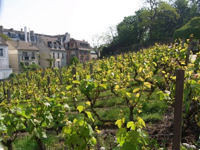 19世紀までは、パリ市内に含まれていなかったモンマルトルは、ブドウ畑と麦畑が広がる中に風車が点在するだけの農地でした。