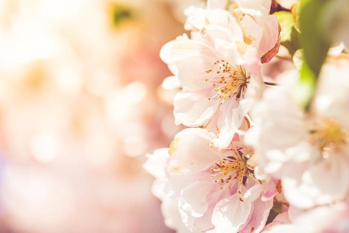 春の肌は、どうしても厳しい冬のダメージを引きずりがちです。 その中で新生活への環境の変化でストレスが加わったり、花粉が飛びはじめたり、紫外線も徐々に強くなり…どうしても敏感な女性の肌にはトラブルがでてきます。  春の肌荒れの原因は大きく分けてこの5つ。  1. 寒い冬のダメージ 2. 新生活でのストレス 3. 強くなる紫外線 4. 花粉 5. 風による乾燥  それぞれ詳しく見ていきましょう。