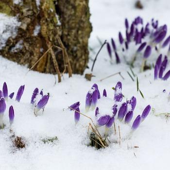 寒い冷えの続く冬、お肌はその厳しい環境でのダメージを春まで引きずっています。  乾燥でヒリヒリしたり、かゆみや赤みが出たり。 口周りなど部分的にカサカサと乾燥してしまったり。 今までなかったニキビやぶつぶつが出てきたり。  春のお肌は冬のダメージを残していて、こういったトラブルが多く出てしまうそうです。