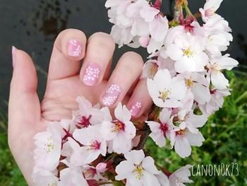 春と言えばお花も外せません!ピンクのベースカラーに、桜や押し花のシールをプラスすればより華やかに♪こちらはピンクネイルにダイソーの桜シールを貼ったアレンジです。仕上げに桜の中央にピンク色をポンポンと塗ると、ほんのりと色付いてより素敵に。