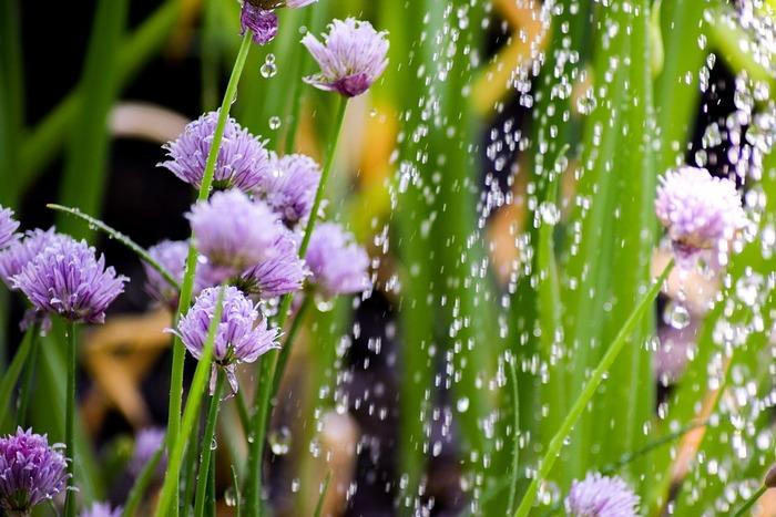 お庭で植物たちにお水をあげながら、軽くストレッチするだけでも違います。ストレスを感じると、体はどうしても縮こまりがちになります。手や足を大きく伸ばして、たっぷり酸素を吸うと心の中まで新鮮な空気で満たされたような気持ちになります。