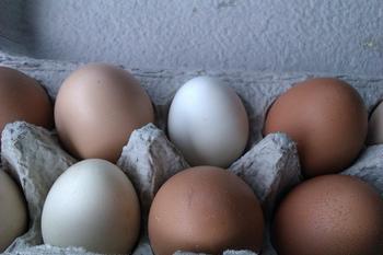ゆで卵を作るときは、賞味期限間近の古い卵を使うのがベスト。新鮮な卵は炭酸ガスが多いため、殻が剥きにくく、白身がボソボソになってしまうんです。