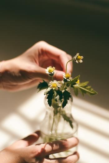 「切り花」も美しさを長持ちさせるためにはお世話が必要です。動物を飼いたくてもいろんな事情で飼えない方は多いですよね。もちろん動物ほどではありませんが、生きている事を実感し手をかけた分だけ愛着が湧くものです。
