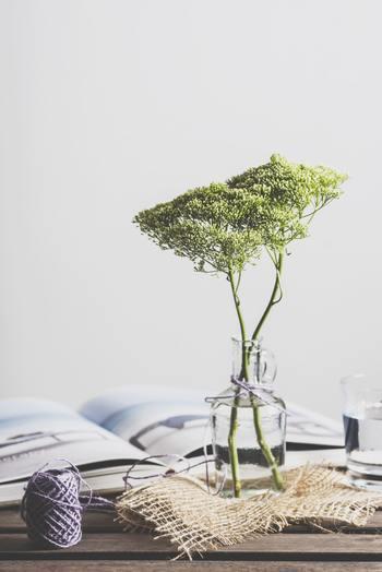 毎日綺麗なお水に変えることはもちろん、その際は花瓶の中も綺麗に洗い、清潔に保ちましょう。