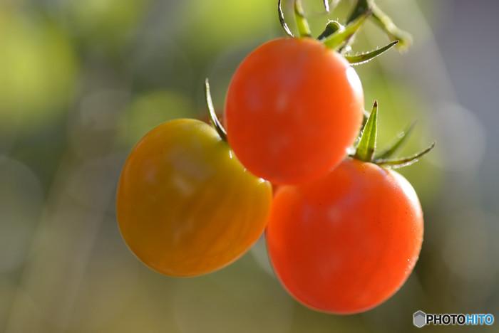 サラダでよく親しまれるトマトは、リコピン、ビタミンC、ミネラル、食物繊維などをバランス良く含むことで知られる野菜です。鮮やかなトマトの赤と甘味を活かして、あなたらしい可愛らしい野菜スイーツを作ってみてくださいね。