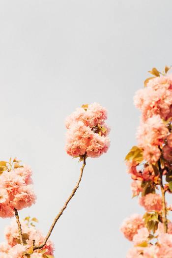 言わずと知れたスピッツの名曲「春の歌」。某スポーツドリンクのCMソングに起用され、今もなお春になると街のどこかで流れる名曲です。意思を感じる詞と春を感じる爽やかで美しいメロディーに心を奪われます。