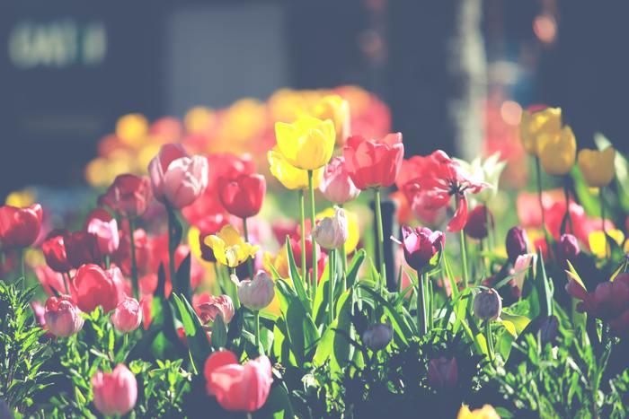 いかがでしたか?素敵な音楽があるだけで、私達の日常はより豊かなものになります。期待と不安な気持ちが入り混じる春は、素敵な音楽を味方に、穏やかな時間を過ごしてみてくださいね♪