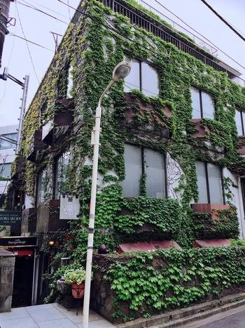 原宿、広尾、そして自由が丘にお店を構える「Enseigne d'angle(アンセーニュ ダングル)」は、古き良き喫茶店の面影を残す老舗喫茶店。こちらの蔦に覆われた原宿店は、1975年にオープンしました。
