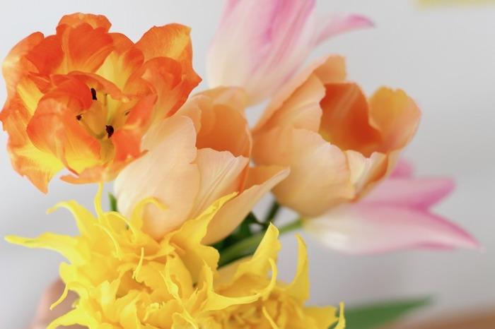 生命力に溢れたチューリップをお部屋に飾ると、お部屋全体がぱっと明るくなりますね。旬の時期を逃さないよう、チューリップをたっぷり飾って、春を満喫してみましょう♪