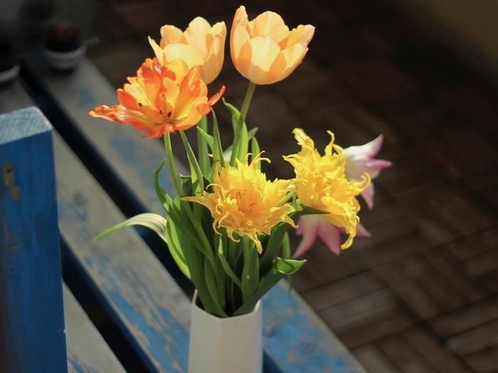 花びらをいっぱいに開いたチューリップたちは、元気いっぱいのイメージ。外に出すと、光と影のコントラストが素敵に見えます。