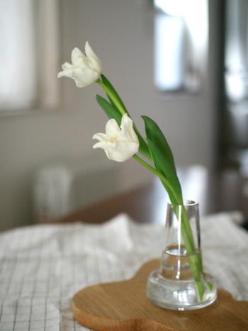 まるでお絵かきの中のチューリップのような可憐な咲き方をしています。ゆらりと伸びる茎は動きがあって、毎日の変化が楽しみになりますね。