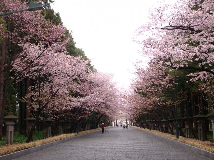 自然豊かな場所にある北海道神宮では、四季折々の美しい風景も堪能できます。雄大な大自然に囲まれた境内で邪気を払い、すがすがしい気持ちと、開拓民のマインドのように希望に満ちた強いエネルギーを体感してみませんか?