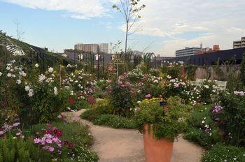 イングリッシュガーデンは日本でも人気が高く、「横浜イングリッシュガーデン」や「蓼科高原 バラクライングリッシュガーデン」など美しい庭園を満喫できるスポットも各所にあります。(写真は横浜イングリッシュガーデン) 自宅のお庭にイングリッシュガーデンのポイントを取り入れて、植物の自然な美しさを満喫してみませんか?