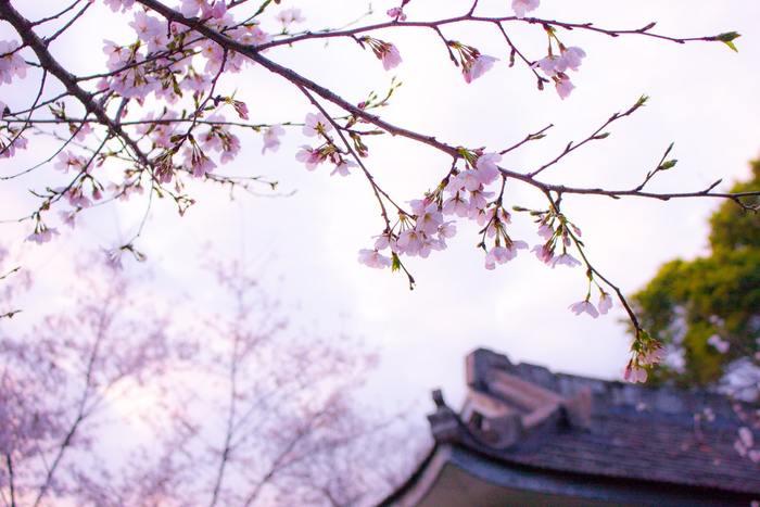 ちょっぴりへんてこだけど惹かれる不思議な世界が広がります。どこか懐かしくほっとする日本の風景と、 平凡だけどちょっぴり変わった家族の日常が、ほんわか優しい気持ちにさせてくれます。
